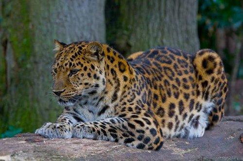 10 loài động vật đang đứng trước nguy cơ tuyệt chủng