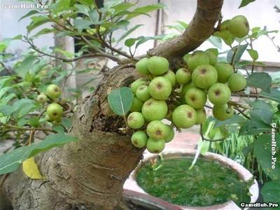 Những loài cây nào mang lộc vào nhà trong ngày Tết ?