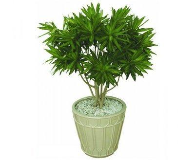 Những loài cây làm sạch không khí trong nhà cực tốt