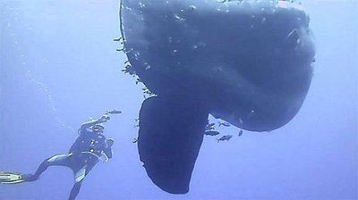 Những loài động vật lớn khổng lồ nhất trên thế giới
