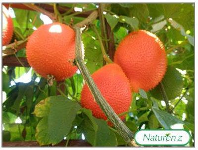 Những loại hoa quả giúp chữa nóng Gan cực hiệu quả