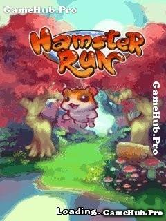 Tải game Hamster Run - Chuột Bạch chạy vô tận cho Java
