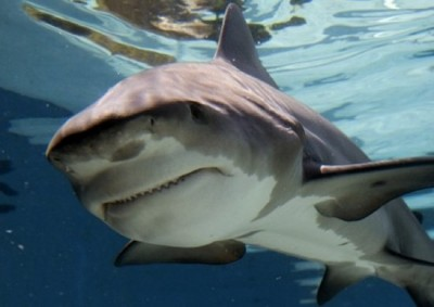 Những loài thủy quái nước ngọt nguy hiểm nhất hành tinh