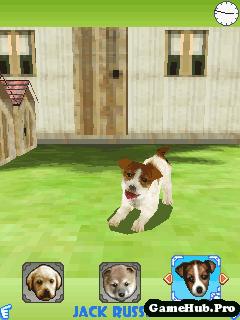 Tải Game Dogz 3D - Nuôi Chó Cún Ảo 3D by Gameloft Java