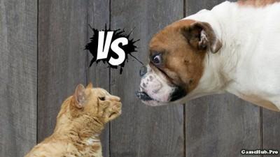 Chó và mèo loài nào yêu thương con người hơn ?