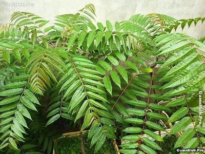 10 loại cây giúp chữa những bệnh Nan Y quen thuộc