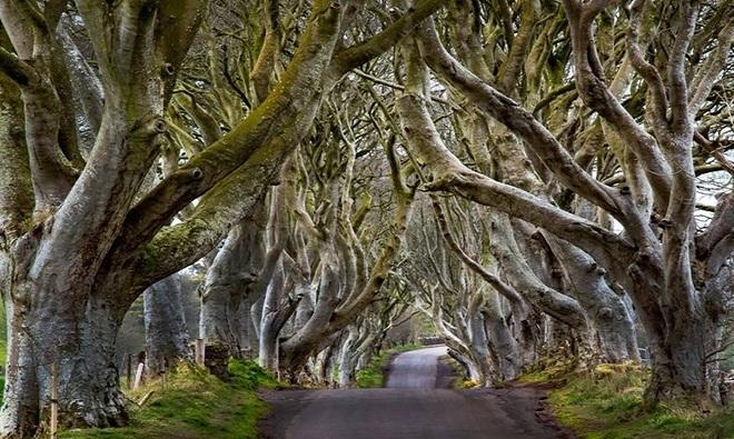 Hình ảnh những khu rừng đẹp như trong Truyện Cổ Tích