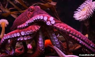 Khám phá 10 loài động vật thông minh nhất Hành Tinh