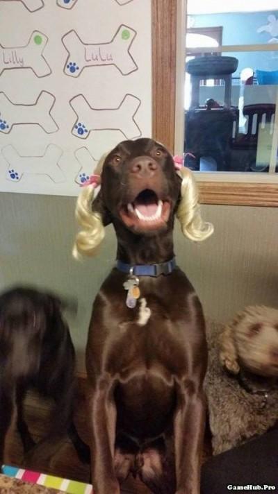 Bộ ảnh hài hước về chó và mèo không thể nhịn cười được